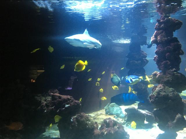 musee_oceanographique_monaco