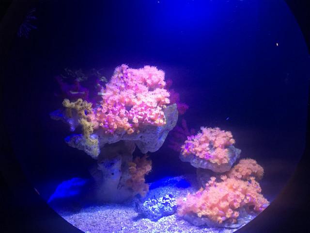 musee_oceanographique_monaco3