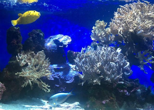 musee_oceanographique_monaco5