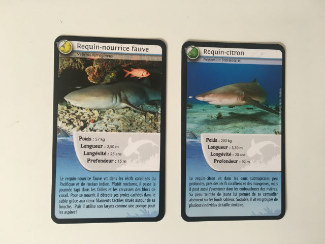 défis_nature_requins